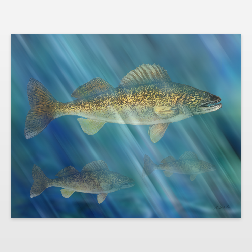 Walleyes