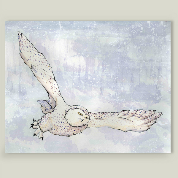 """Snowy Owl"" by Taylor Rose, BoomBoom Prints"
