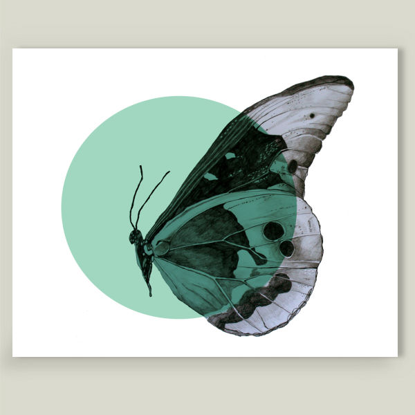 """Butterfly"" by Morgan Kendall, BoomBoom Prints"