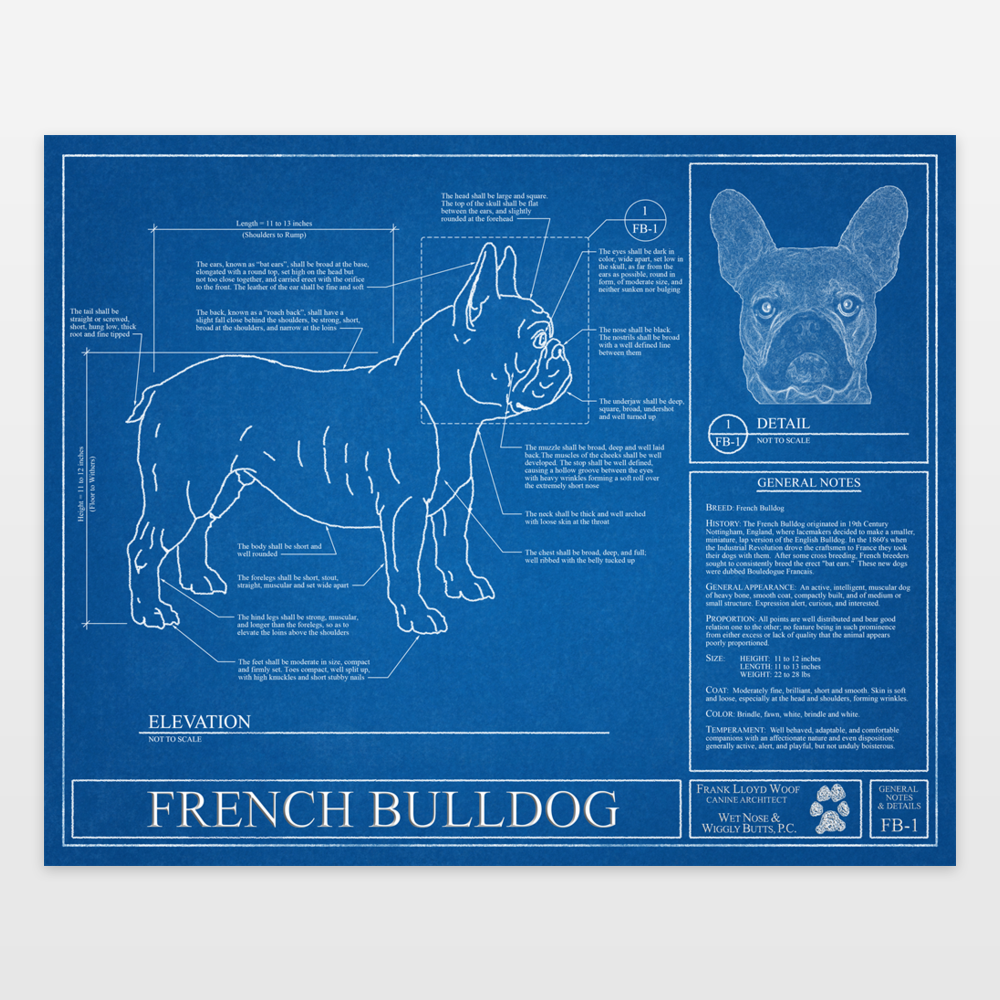French bulldog blueprint art print by wetnosewigglybutts on french bulldog blueprint art print by wetnosewigglybutts on boomboomprints malvernweather Image collections